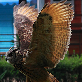 Safari  Park.. by Ubayoedin As Syam - Animals Birds