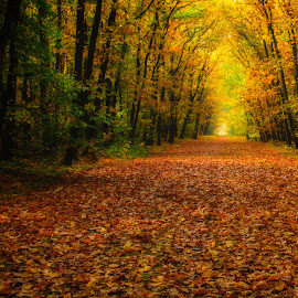 Colors of fall by Gerd Moors - Landscapes Forests ( orange, autumn, green, fall, trees, forest, yellow, leaves, light,  )