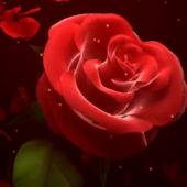 Wedding Rose Live Wallpaper