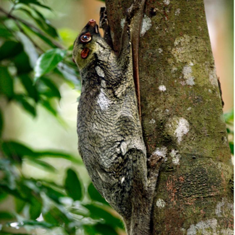 Hewan Mamalia, Ciri ciri mamalia dan Contoh hewan Mamalia
