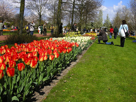 Obiective turistice Olanda: parcul floral Keukenhof
