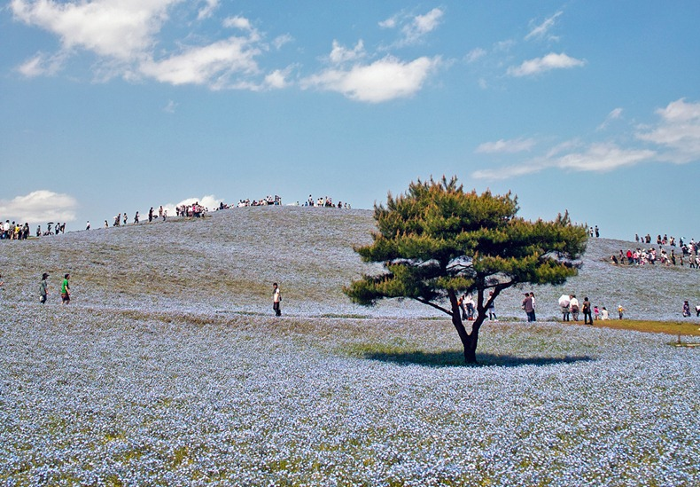 hitachi-seaside-park-16