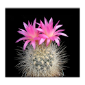Cactus of The Day icon