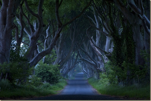 The-dark-hedges-009