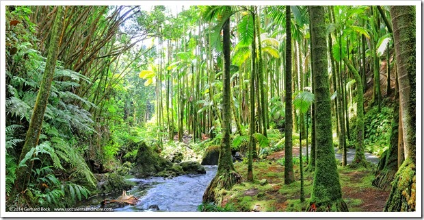 140726_HawaiiTropicalBotanicalGarden_creek_pano