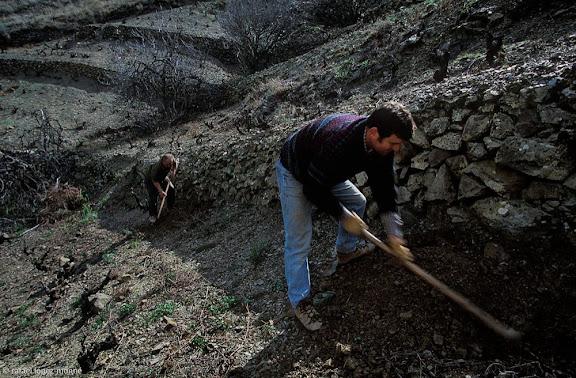 Empeltat de vinyes velles al coster del Riuet, DOQ Priorat,La Vilella Baixa, Priorat, Tarragona2003.02