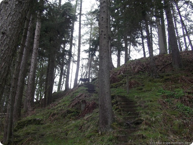 a steep bit in the woods