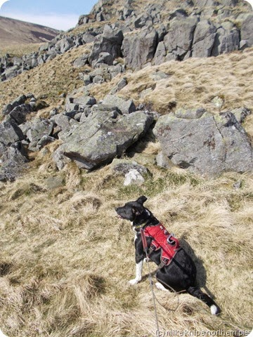 pooch on cunyan crags