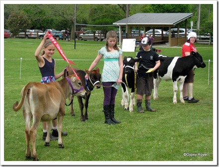 Prize giving after the calf judging at Koputaroa School Agricultural day.