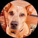 Taylor Wheeler's Dog Training Lifestyle