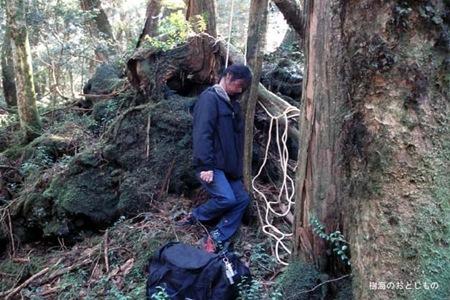 Floresta dos suicídios 06