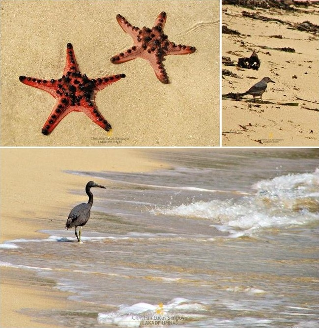 Birds and Starfishes in Bagieng Island