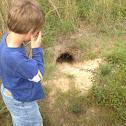 Gopher Tortoise Hole