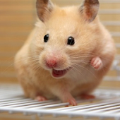 Happy Hamster Pet