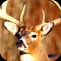 deer danger hunting 2014 icon