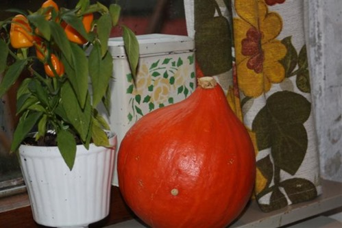 20081024 (1) (Small)