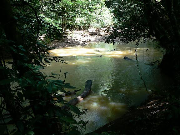 Crique Tortue, à l'ouest de Saut Athanase (Guyane), 21 novembre 2011. Photo : C. Renoton