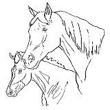 caballo-10.jpg