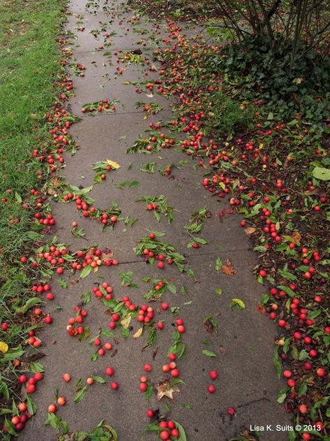 crabapple walk