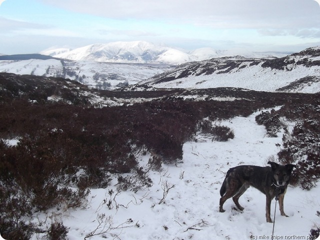blencathra and dawg