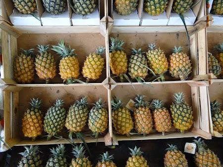 17. Ananas de Azore.JPG