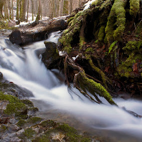 by Siniša Almaši - Nature Up Close Water ( water, stream, wood, roots, croatia, forest, dslr, winter, nature, tree, cold, color, shadow, view, light, river,  )