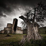 Ancient_tree_at_Sant___Antimo_by_XavierJamonet.jpg