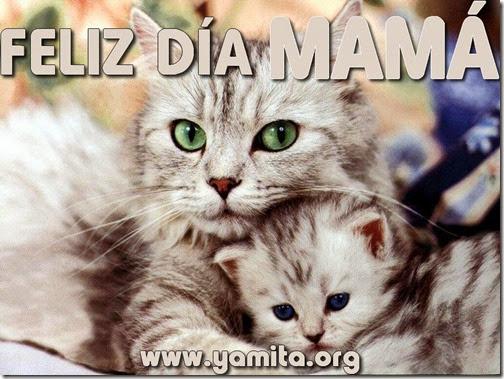 dia de las madres (27)