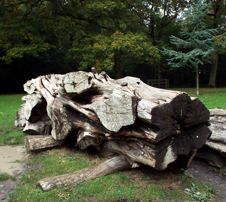 woodland felled tree