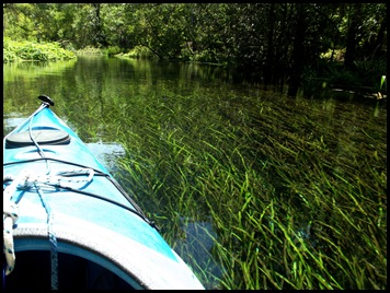 kayaking the Ichtucknee 122
