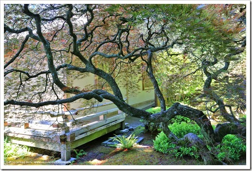 140712_PortlandJapaneseGarden_057