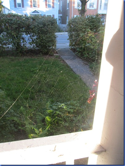 Halloween spiderwebs