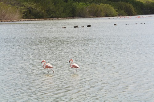 20131012flamingos (1) (Large)