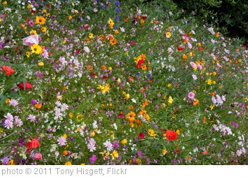'Flower Border 3' photo (c) 2011, Tony Hisgett - license: http://creativecommons.org/licenses/by/2.0/