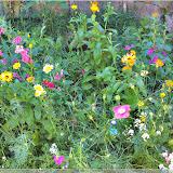 Blumen am Weiherturm