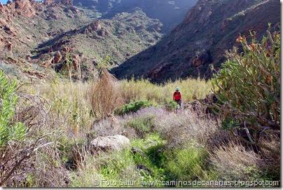 7595 El Aserrador-Vega Acusa(Barranco Chorrillo)