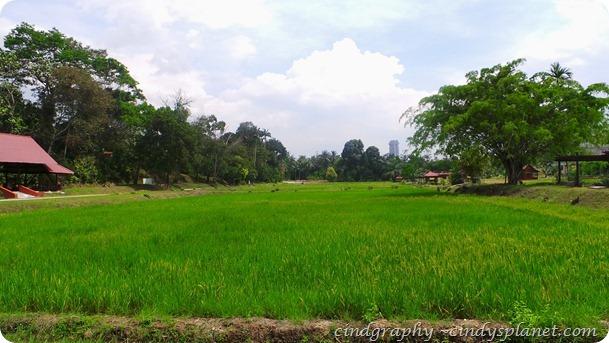 Taman Botani Paddy Field