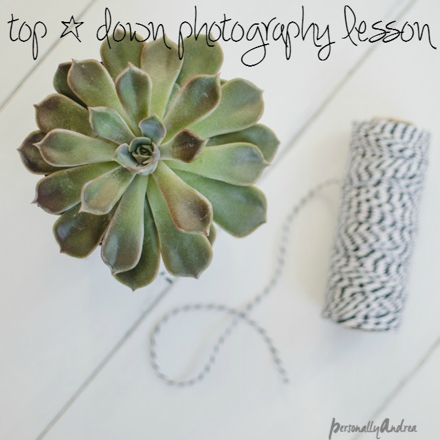 Top Down Photography // succulent and twine