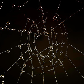cobweb by Zeljko Jelavic - Novices Only Macro (  )