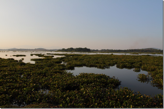 Chiang Saen Lake - A Birding Playground in winter