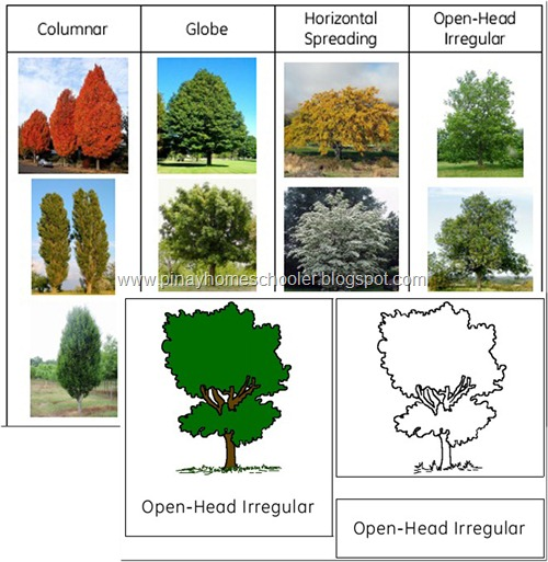 Tree Shapes Learning Pack