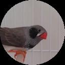 Marcel L'oiseau