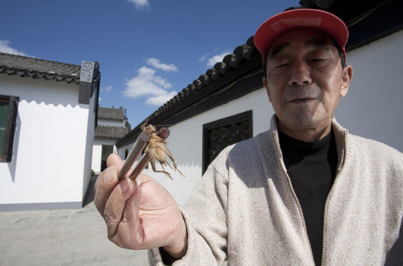 "A participant holds a losing cricket outside the ranch. The ""Yu Sheng Cup"" Cricket fighting tournament in Chongming Island in luhua village at Xilai Ranch. Held during the National holiday and organised by the Chongming Tourist Department and local Government.  A total of 16 groups participated , the winning group is awarded a certificate and 10,000RMB (1500 USD). Groups came with crickets collected from fields across China including Shandong Province and Hebei Province."