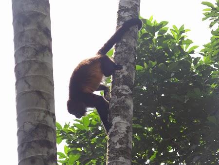 05. Maimuta in copac.JPG