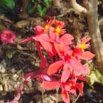 tuinorchidee doet het al jaren, zomer en winter
