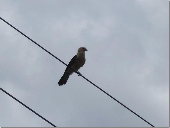 BR-319_Humaita_Manaus_Day_2_DSC05413