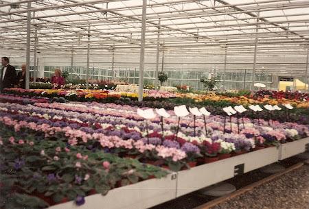 Multe flori la Floriade 1992