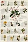 Interpretationes Of Ancient Herbs