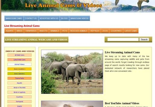 live-animals-cam