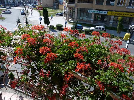 7. plin de flori.JPG